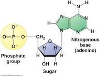http://dnarnanews.blogspot.com/2013/04/what-is-three-parts-of-nucleotide.html