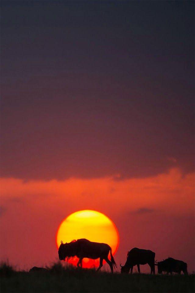 مجموعة من أجمل صور غروب الشمس في كينيا Beautiful Sunrise Sunset Sunrise Sunset