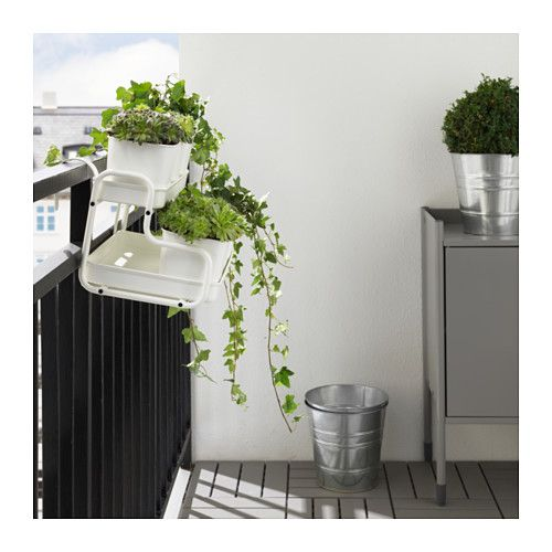 20 best o plant images on pinterest plant pots potted plants and flower pots. Black Bedroom Furniture Sets. Home Design Ideas