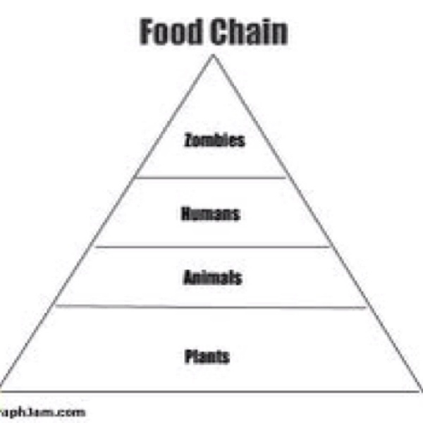 Pin land food chain examples on pinterest