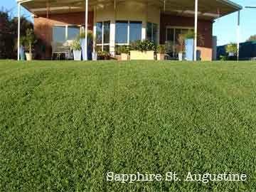 St. Augustine Grass Lawn Maintenance Schedule