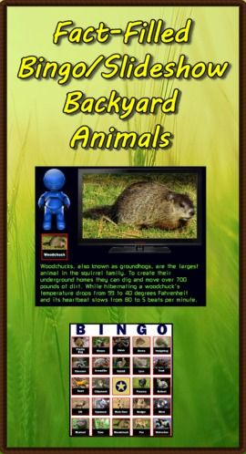"Fact-Filled Bingo is a computer program sure to bring excitement to your Backyard Animals unit. The talking robot calls out random information complete with pictures and interesting facts. 40 bingo cards are provided. Use the companion program Fact-Filled Slideshow and a SmartBoard/projector to highlight 48 different facts. Again the talking robot does the narrating. As a bonus I've included the manual ""Text-to-Speech"" which teaches you how to make PowerPoints talk. (PC & Mac) ($)"