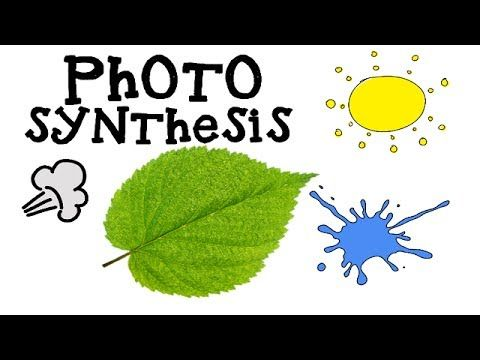 This introductory, animated video explains the process of photosynthesis by which plants take in sunlight, carbon dioxide and water to produce their foodand Oxygen. Suitable for learners/kids new to the concept. For more visit : https://www.youtube.com/user/tofunza