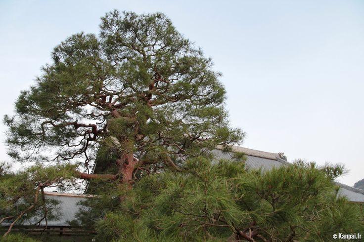 Forêt de bambous de Sagano, Japon | galerie photos de tenryu ji