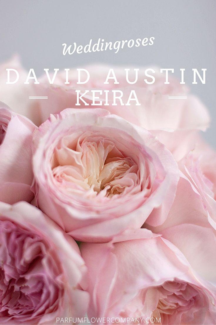 Keira from the David Austin Wedding Collection #luxuryroses #weddinginspiration #parfumflowercompany