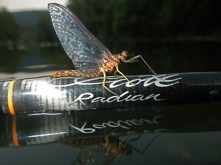65 best fly fishing gear flies and the like images on for Fly fishing supplies near me