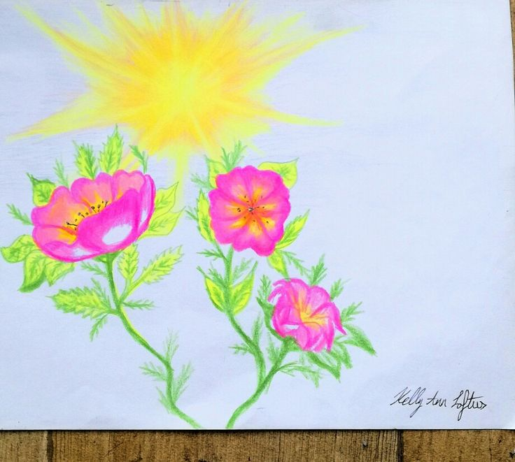 Colouring pencil drawing of a flower / flower power