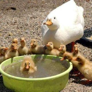Happy duck family enjoying the day!