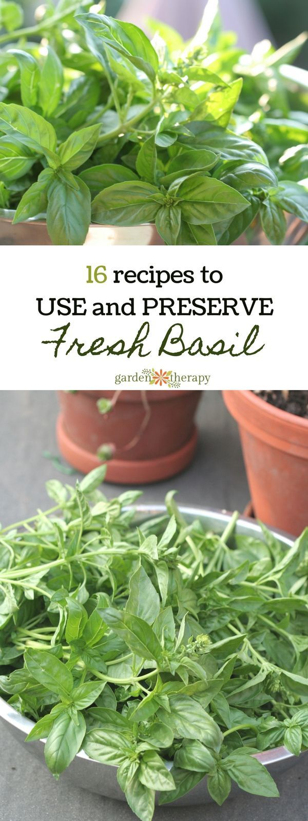 16 Recipes for Using or Preserving Basil