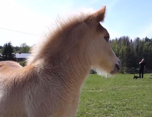 fluffy horses - photo #42