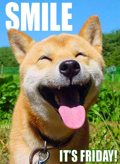 a2752df43409f920dd907479384a64fa smiling dogs smiling animals 71 best funny friday dogs images on pinterest animals, funny,Friday Dog Meme