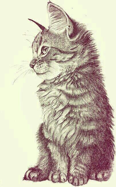 Cat ilustration