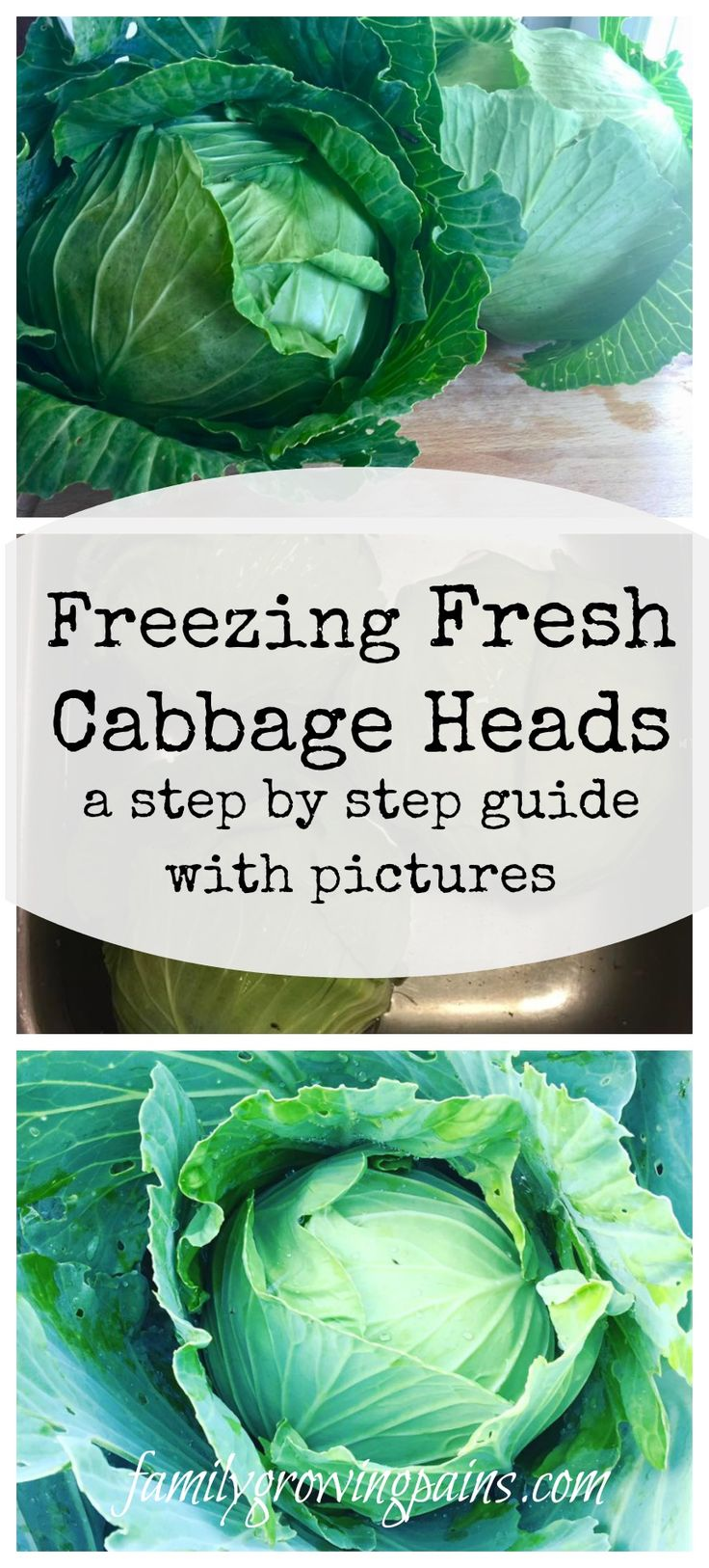 Freezing Fresh Cabbage Heads - a step by step guide  Do you want to preserve your fresh cabbage but can't stand sauerkraut? Cabbage freezes great! You can have fresh cabbage all winter long.