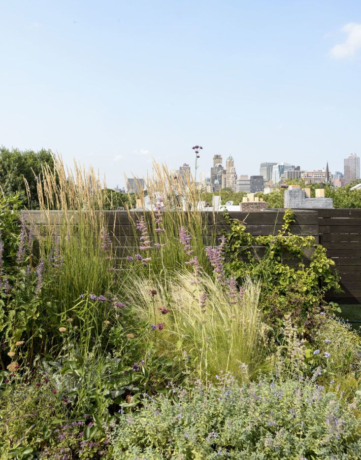 Ask the Expert Roof Garden Basics with Designer Julie Farris : roof meadow - memphite.com