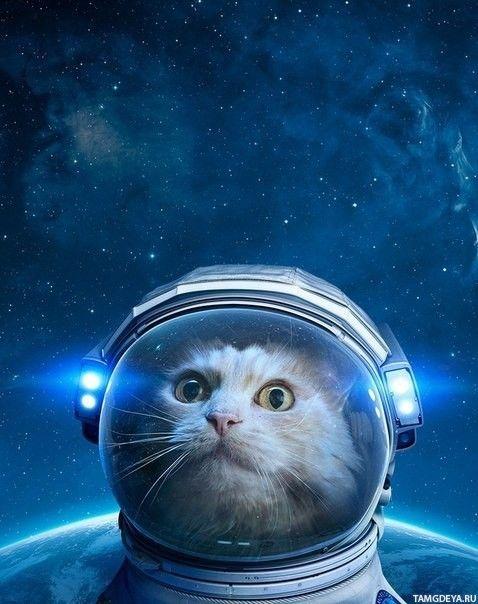 Кот в космосе в скафандре с подсветкой — Картинки на аву ...