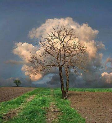 A imagem pode conter: nuvem, céu, árvore, atividades ao ar livre e natureza