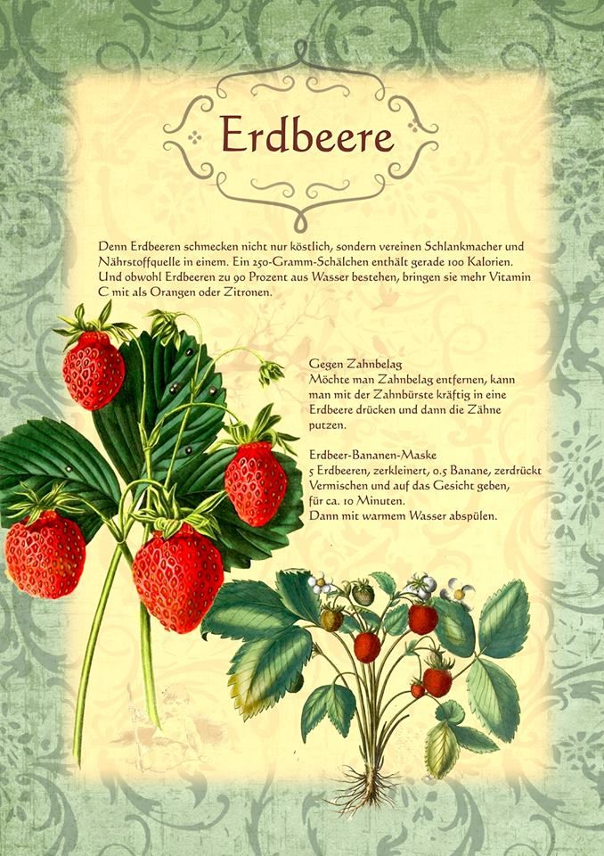 die besten 17 ideen zu erdbeeren pflanzen auf pinterest. Black Bedroom Furniture Sets. Home Design Ideas