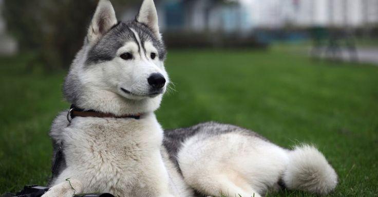Wisata Unik untuk Anjing di London