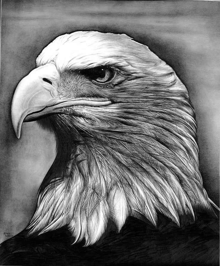 Pencil Sketches of Eagles | Eagle Head Pencil Drawing Bald eagle drawings - eagle by