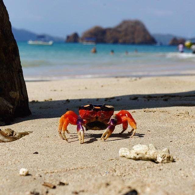 #WednesdayWisdom Do something today that your future self will thank you for! Awesome pic taken by @ceesdijk in Isla Tortuga, Costa Rica #beautifullatinamerica / Haz algo hoy que tu futuro yo te agradezca. Increíble foto tomada en Isla Tortuga, Costa Rica  #costarica #islatortuga #beachlife #happywednesday #explore #latinamerica #loveit #awesome #amazing #travel #explore #wanderlust #explorelatinamerica #discoverlatinamerica #photooftheday #nativocrafts #beautiful