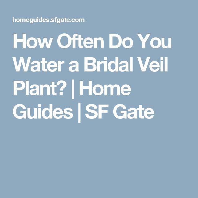 How Often Do You Water a Bridal Veil Plant?   Home Guides   SF Gate