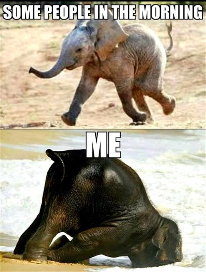 Memes And Pictures Of Elephants The Gentlest Giants Funny Good Morning Memes Funny Animal Memes Funny Animal Quotes