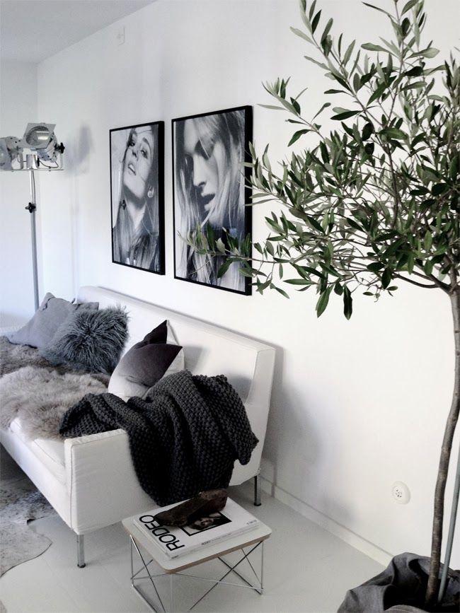 ungewöhnliche wohnzimmer:Black Olive Tree Indoor