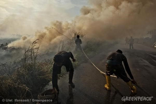 Runaway forest fires show how RSPO is not enough
