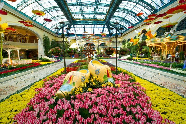 """תיירות ונופש בחו""""ל מלונות ואטרקציות: הגנים הבוטניים בלאס וגאס"""