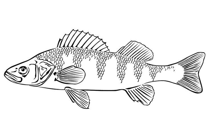 рыба - Поиск в Google