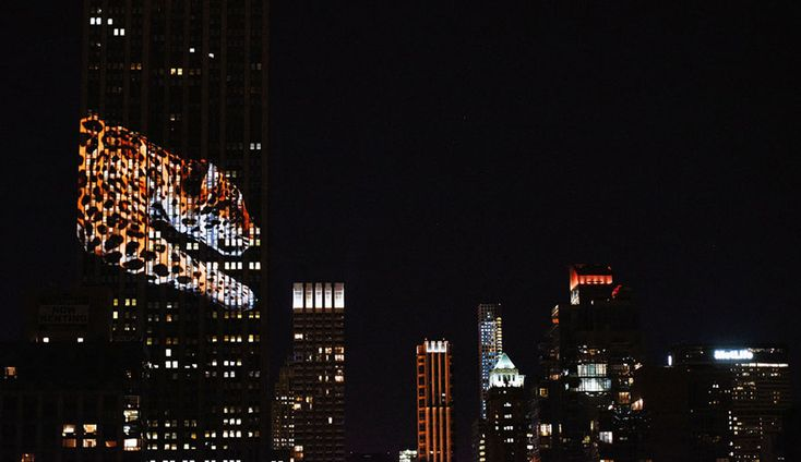 "Cecil The Lion And 160 Endangered Animals Projected On Empire State Building. the Empire State Building's facade was lit by up to 40 projectors shining striking images of 160 different endangered species. ""Projecting Change"" was organized by the Discovery Channel to promote its new documentary Racing Extinction, which airs this December."