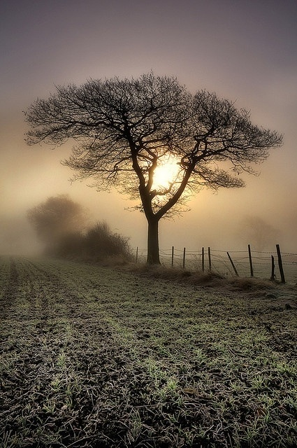 Misty Morning, solitude, tree, sun, sunbeams, fiels, fence, beauty of Nature, mysterious, foggy, fog, beautiful, peaceful, photo