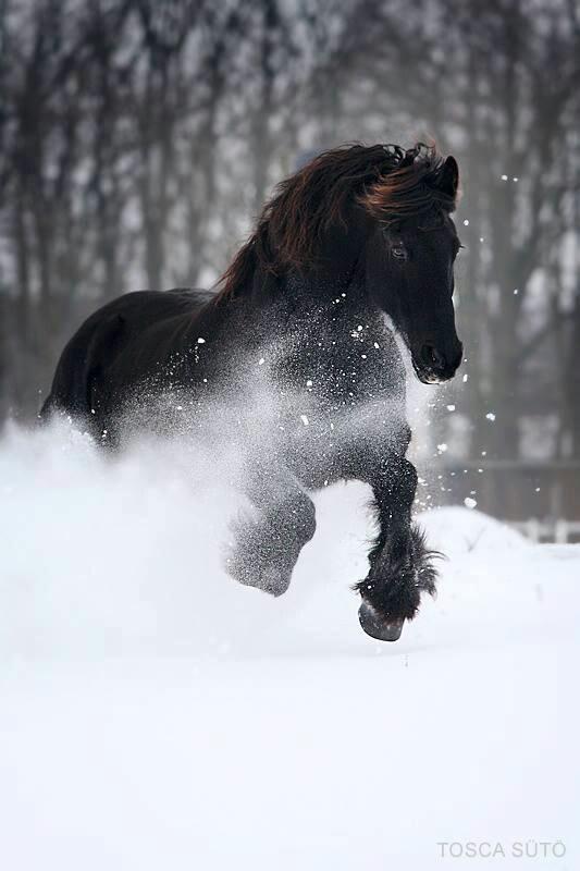 A black beauty