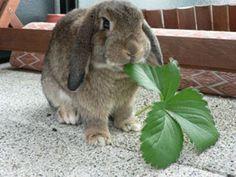 Liste des légumes bons ou pas pour les lapins - Marguerite et Cie
