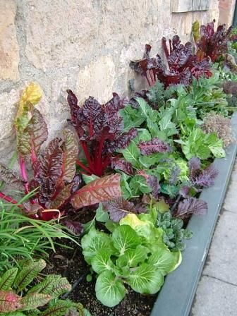 Garden Design Ideas for Small Spaces - Edible color, gorgeous greens and herbs including lettuce, tatsoi and spinach.