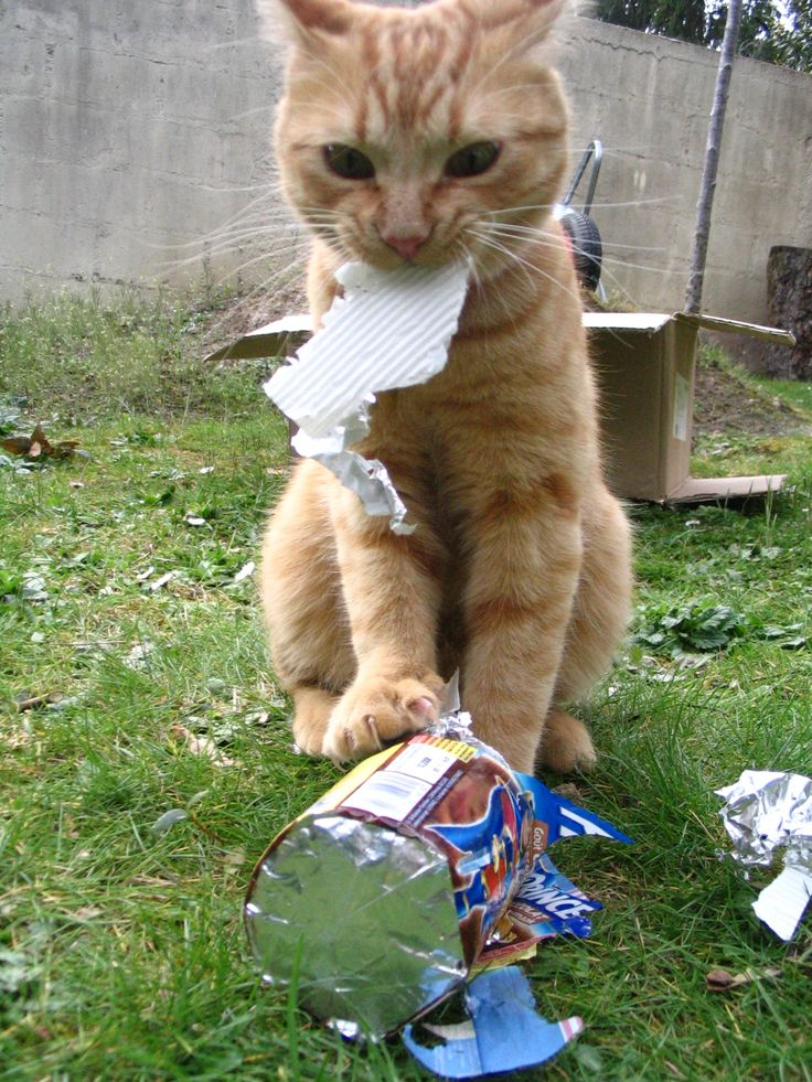 Les friandises de Merry... papier ou gâteaux ? Les deux mon capitaine !