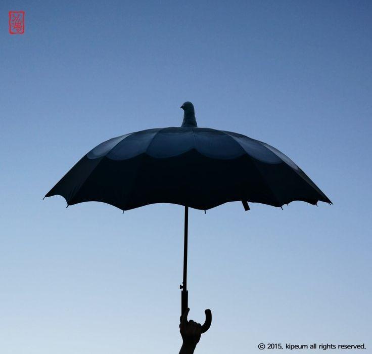 비둘기 우산