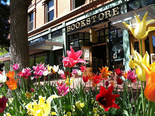 Spring Tulips on Pearl Street by bouldercolorado.gov, via Flickr