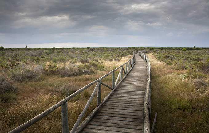 Los 10 mejores parques naturales de España | Skyscanner-Parque Nacional de Doñana, Andalucía