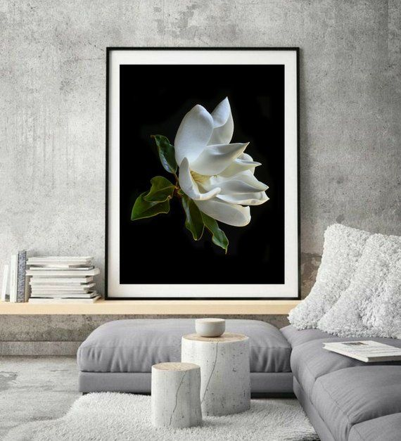 White Magnolia Print Large Flower Photography Artwork Botanical Wall Art For Kitchen Floral Farmhouse Decor Still Life Picture Botanical Wall Art Floral Wall Art Wall Art