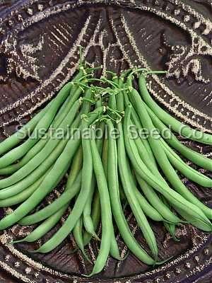 Strike Bush Beans - Sustainable Seed Co.  Great farmers market seller!!