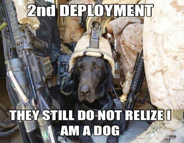 Good Funny Army Adorable Dog - a27da862e9ec0f433240c5b88d8a64de--military-service-military-dogs  Perfect Image Reference_1710065  .jpg