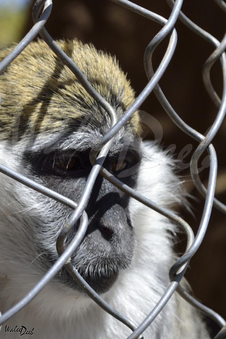 Captivity has a Universal Look!