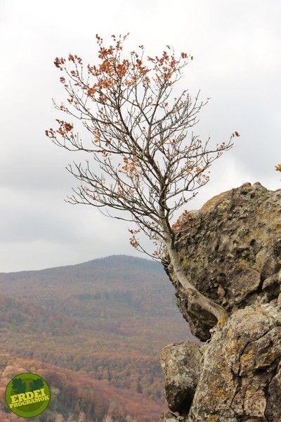 Vadálló-kövek, Visegrádi-hegység | Erdeiprogramok.hu - Élményekben gazdag magyar erdők