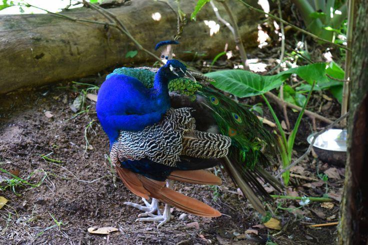 Animal | por santiago restrepo fotos Sustentabilidad