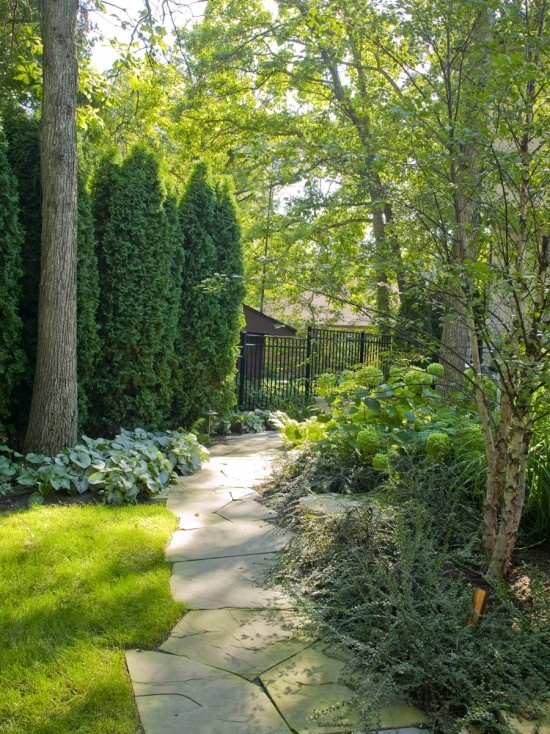 Privacy House Plants Yard Pinterest Gardens Privacy