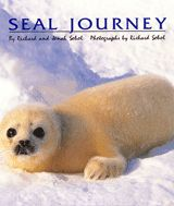 Richard Sobol's Seal Journey: beautiful photos & fascinating story by photojournalist and his 8-year old son.  Wonderful read-aloud with kids.