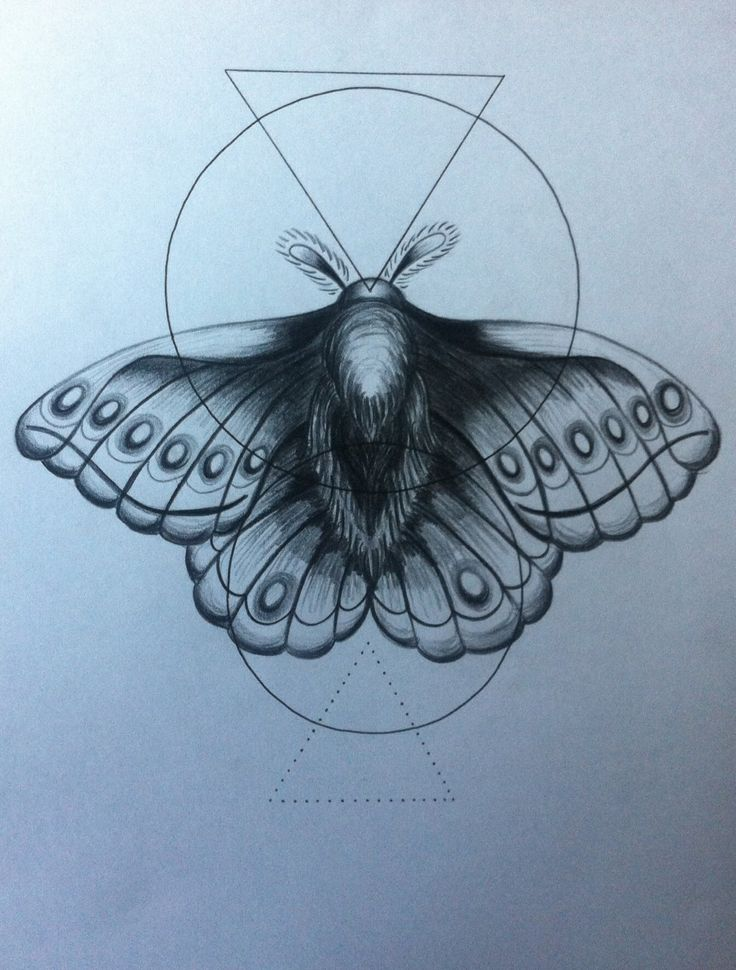 Geometric moth in black pencil and pen by Victoria Taylor Illustrations.