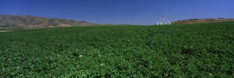 Potato Field Surrounded by Mountains, Burley, Idaho, USA