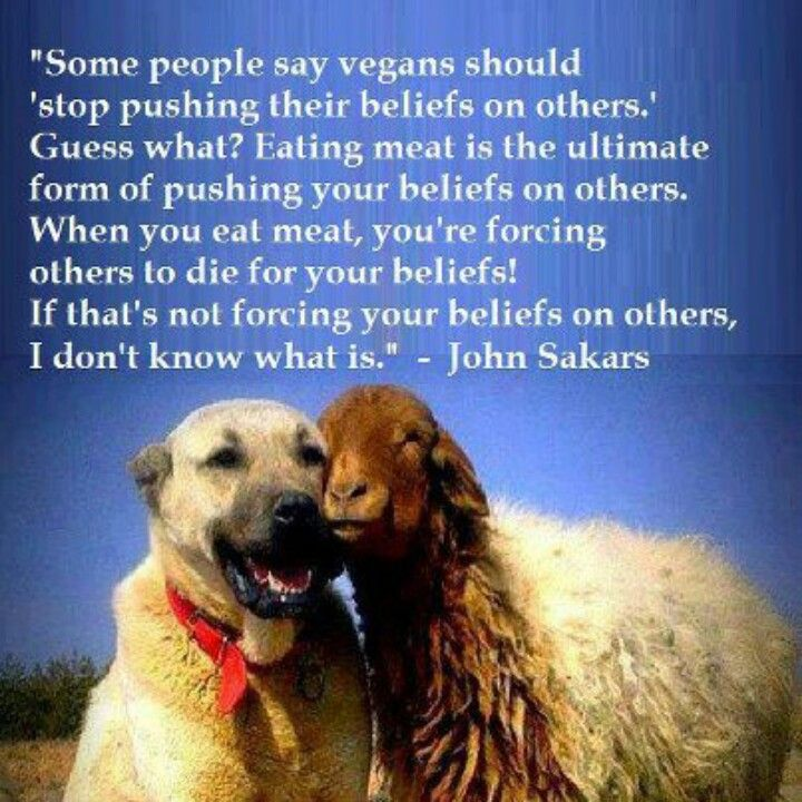 vegans should stop pushing their beliefs on others when